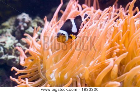 Exotic Fish  7