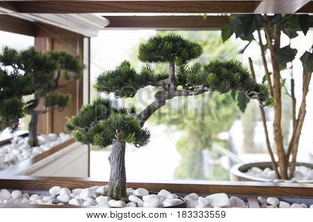 Bonsai tree planted in the interior of the restaurant