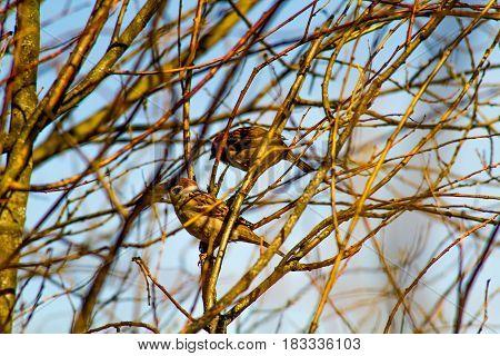Spring. Bird sitting on a tree branch