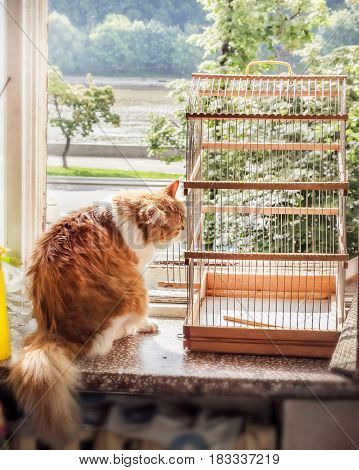 Cat with bird cage on summer window at day