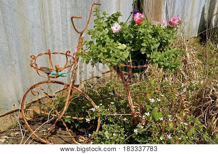 A decorative makeshift bike  from twisted iron rods serves as a plant holder