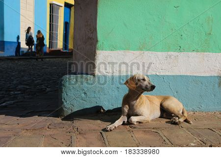 Dog is resting on the street of Trinidad Cuba