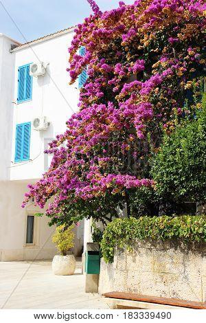 Budva, Montenegro. Streets in Budva. Montenegro, Europe