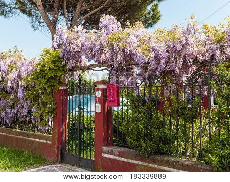 A garden gate with a wisteria plant growing on the fence with a red postbox on the island of Burano Italy.