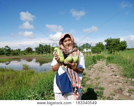 Thai Women Harvest Agriculture Winter Melon Or Ash White Gourd Or Tallow Gourd Or Chinese Preserving