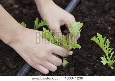 hands holding and caring a young green plant / planting tree / growing a tree / love nature / save the world
