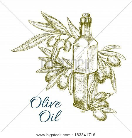 Olive oil vector sketch of green olives and olive-tree branch with oil bottle. Design of fresh olive fruits bunch for vegetarian food seasoning product package or vegetable salad flavoring ingredient