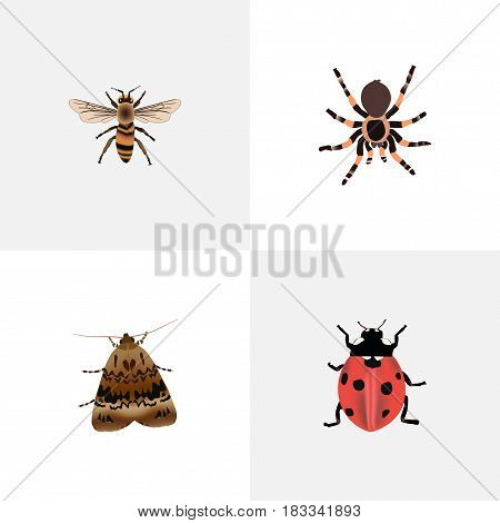 Realistic Tarantula, Butterfly, Ladybird And Other Vector Elements. Set Of Animal Realistic Symbols Also Includes Housefly, Butterfly, Moth Objects.