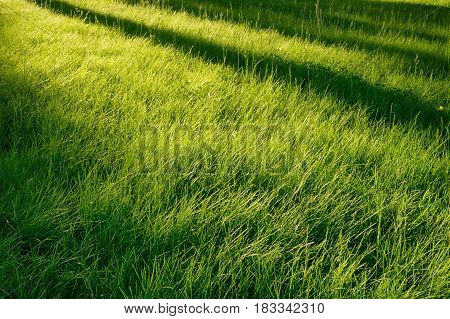 Idyllic green grass glade at morning sun. Long tree diagonal shadows over it. Natural abstract background seasonal and outdoors theme
