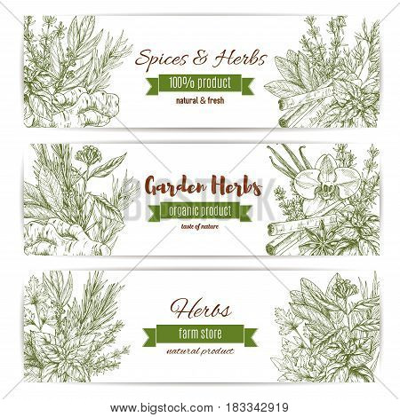 Herbs and spices vector banners of parsley and cinnamon, lavender and ginger. Seasoning cilantro, rosemary or oregano and cloves or anise. Condiment basil or thyme and dill or tarragon and cinnamon