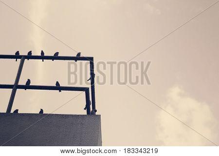 Rooftop Railings Birds Blue Sky