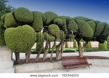 Madrid (Spain): the Park of Buen Retiro at evening. Trees with strange shapes