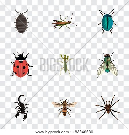 Realistic Dor, Poisonous, Arachnid And Other Vector Elements. Set Of Bug Realistic Symbols Also Includes Blue, Poisonous, Scorpion Objects.