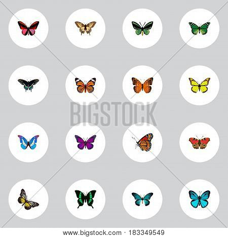 Realistic Milkweed, Morpho Hecuba, American Painted Lady And Other Vector Elements. Set Of Beautiful Realistic Symbols Also Includes Bluewing, Blue, American Objects.