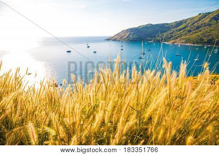 Yatch Boat On Andaman Sea With Yellow Grass