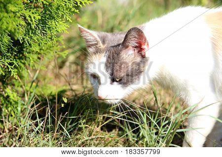 Montenegro cat. Cat in Kotor. Beautiful little cat