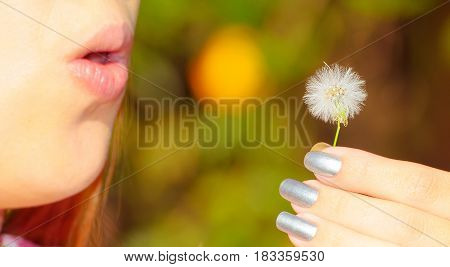 Girl holding on hand and preparing to blow a dandelion.