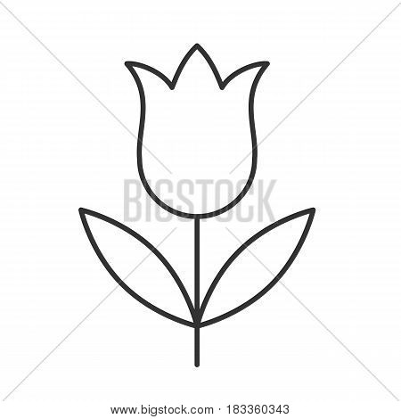 Tulip linear icon. Thin line illustration. Contour symbol. Vector isolated outline drawing