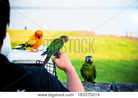 Parrot, lovely bird animal and pet at the natural park
