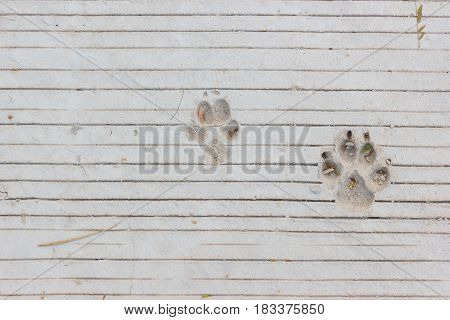 Dog footprints on lines concrete floor with copyspace