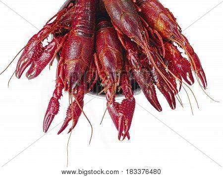 close up of boiled louisiana crawfish isolated