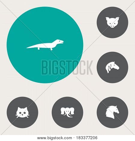 Set Of 6 Brute Icons Set.Collection Of Horse, Steed, Gecko And Other Elements.