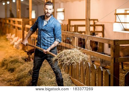 Farmer in blue t-shirt and jeans working with hay in the goat barn