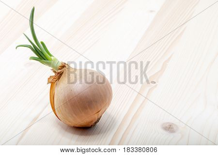 Onion Germinating On A Natural Pine Wood Board.
