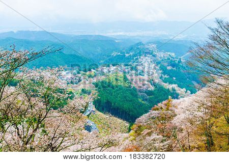 Cherry blossom on mount yoshino in the morning at nara japan