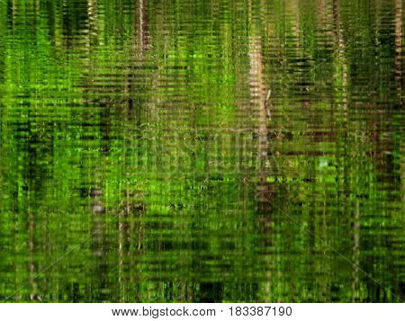 Green, watery reflections on a lake background.