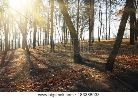 autumn landscape with sunbeams between bare trees