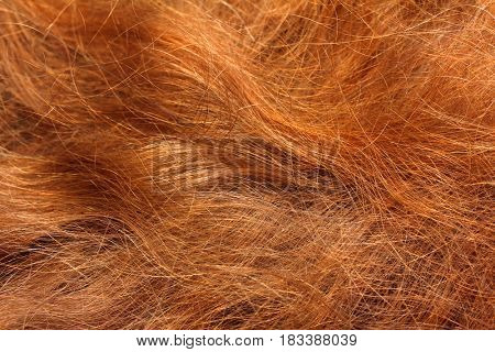 woman curled red hair close-up background