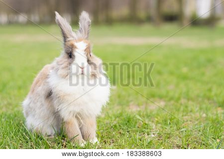 Rabbit In The Clearing