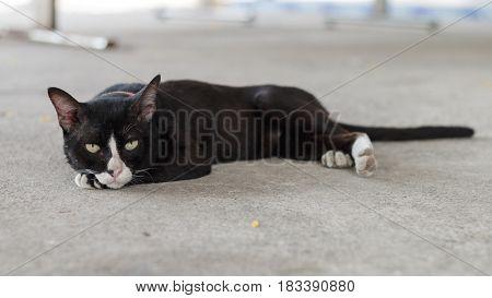 The homeless black cat sleep on the floor