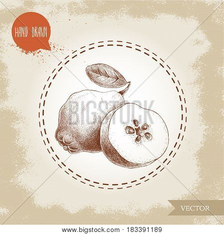 Hand drawn sketch style illustration of quince half quince. Vector fruit illustration.