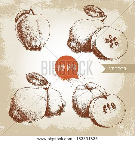 Hand drawn sketch style set of quinces. Quince apple with leaf group of quinces and sliced quince. Eco fruit vintage vector illustration.