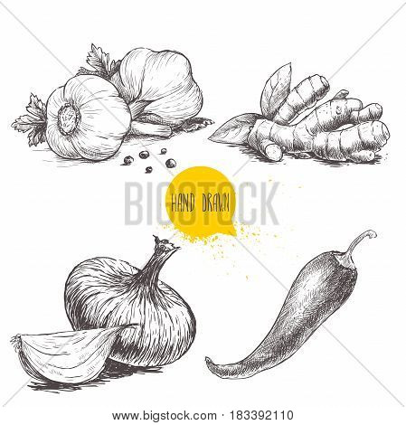 Hand drawn sketch style set illustration of different spices isolated on white background. Garlics with black peppers ginger root onion and red hot chili pepper.