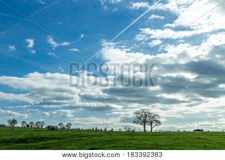 Calm Trees And Meadows On Spring With The Vast Blue Sky And Puffy Clouds