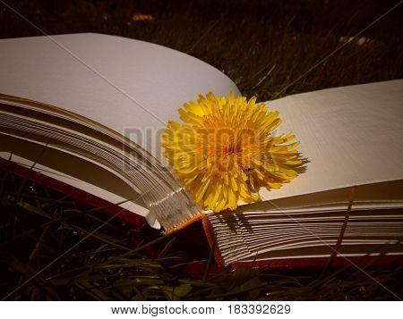 Yellow dandelion laying on hardback book on the grass