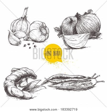 Hand drawn sketch style set illustration of different spices isolated on white background. Garlics with cloves and black peppers ginger root onions and sliced red hot chili peppers.