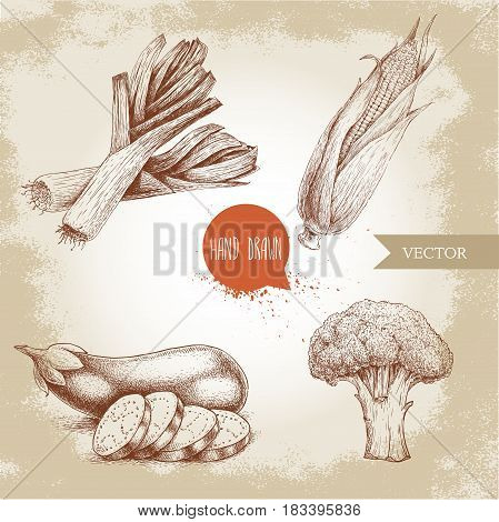 Hand drawn sketch style vegetables set. Leeks eggplant with slices broccoli and sweet corn maize. Farm fresh food on grunge vintage background.
