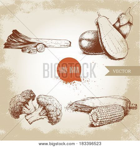 Hand drawn sketch style vegetables set. Leek with slices eggplant with half aubergine broccoli and sweet corn maize. Farm fresh food on grunge vintage background.