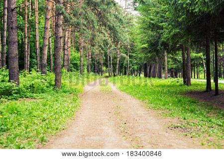 Country road through green lush tree alley in beautiful park on sunny summer day.