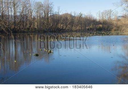A lake for catch and release fishing in a campground in Western North Carolina