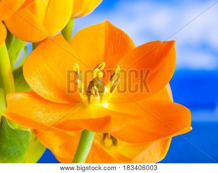 3D orange flower with blue background detail