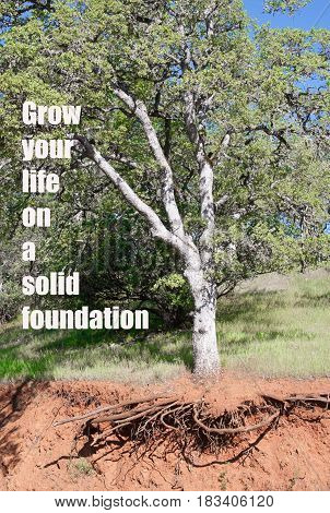 Photo of tree with exposed roots with text: Grow your life on a solid foundation