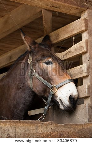 Brown Horse In Stables