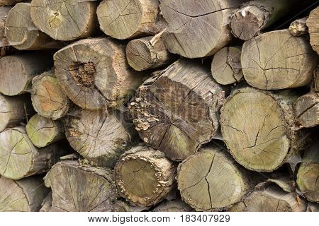 Detail Of A Lot Of Round Trunks - Wooden Abstract Background. Outdoor Rack With Hut Construction Woo