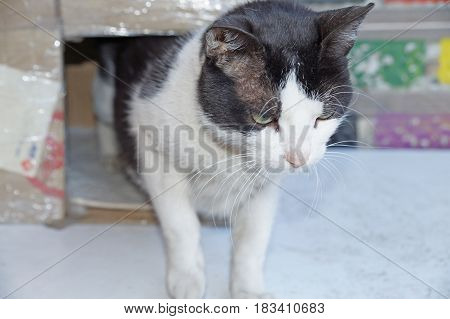 A cat is playing near the house. Cat and furniture. Domestic cat.