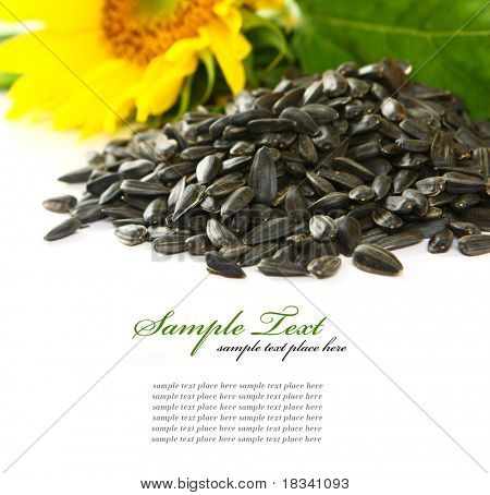 sunflower isolated over white background